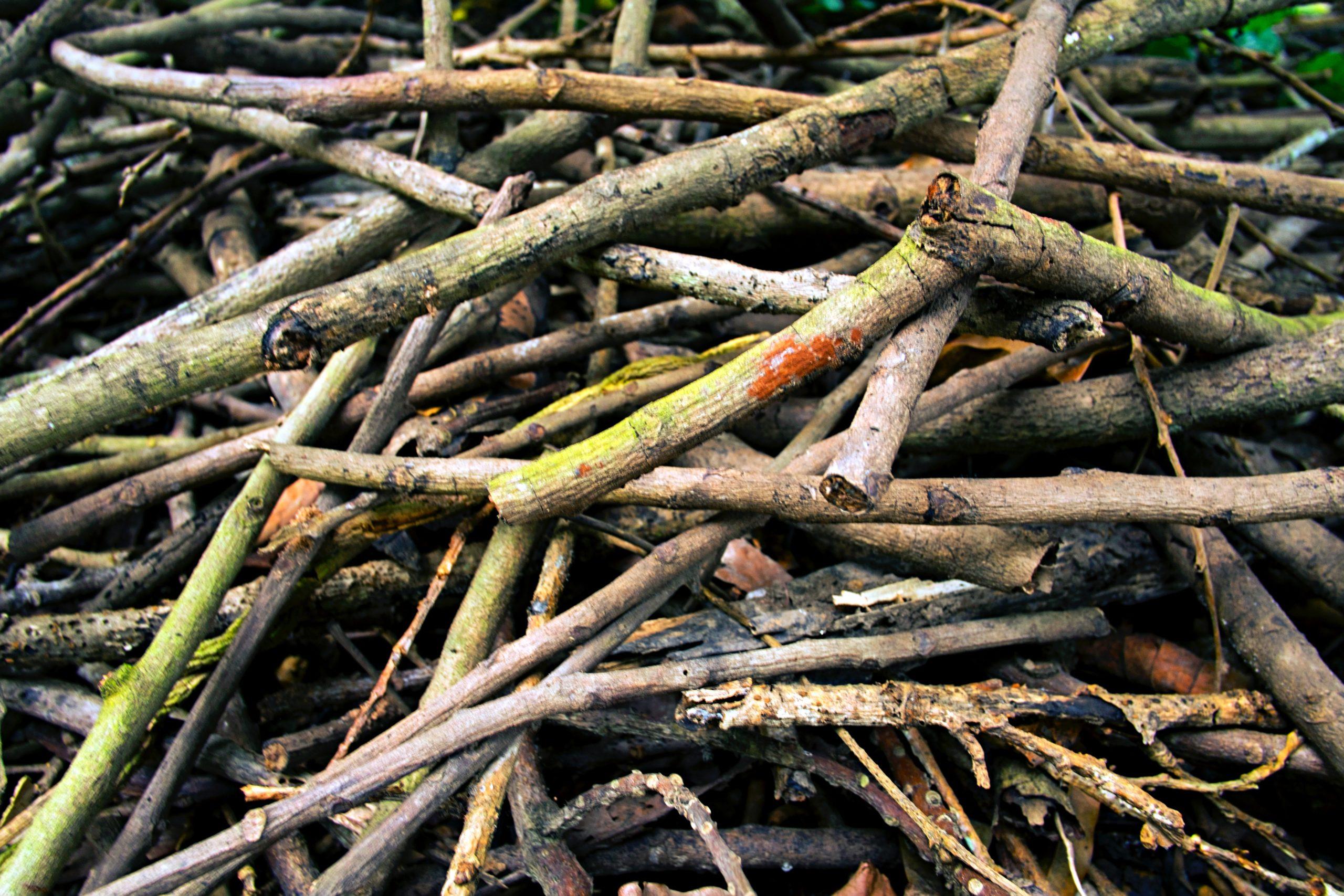 Jak działają ogrodowe rozdrabniacze do gałęzi?