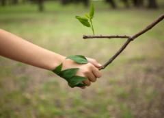 Jak długo zajmuje przeprowadzenie inwentaryzacji przyrodniczej?