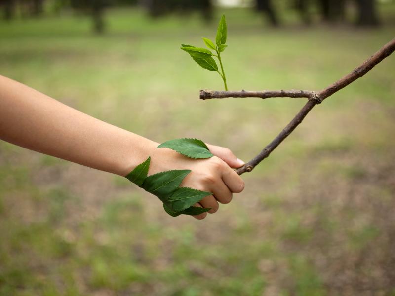 Jak długo zajmuje przeprowadzenie inwentaryzacji przyrodniczej
