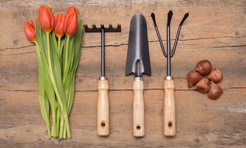 najbardziej użyteczne narzędzia ogrodnicze