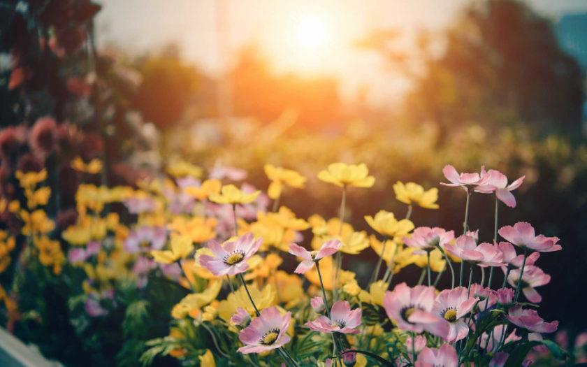 Kwiaty kwitnące w sierpniu - kolorowe lato w ogrodzie