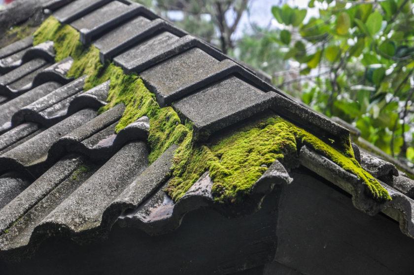 Mech na dachu – skąd się bierze, jak się go pozbyć i dlaczego trzeba to zrobić